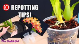 10 easy tips for repotting Orchids you should know!