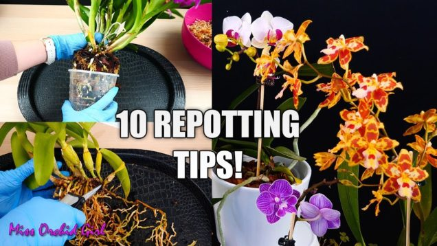 10 Tips for Repotting Orchids You Should Know! | Orchid Tips for Beginners