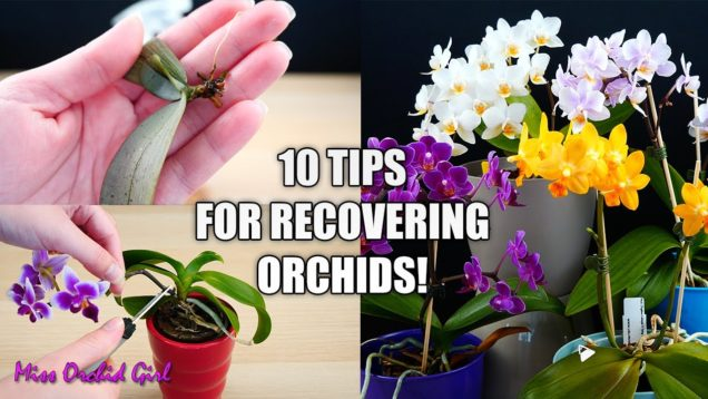 10 Tips that help Orchids recover from shock! – Orchid Tips for Beginners