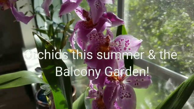 2017: Summer Orchid Blooms & Garden Harvest: Heirloom Tomatoes & Jalapenos!! Succulents & Cactus…