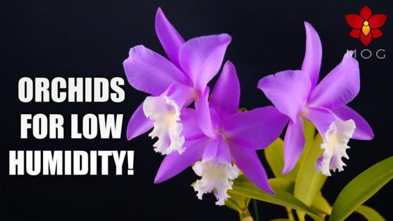 6 Orchids that thrive in VERY low humidity! 🤯