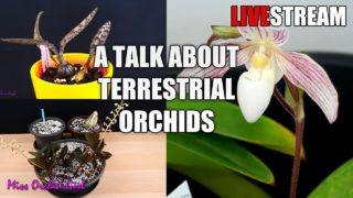 A talk on Terrestrial Orchids – Livestream