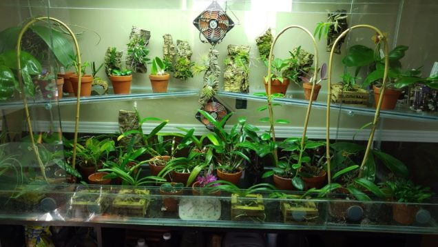 August 2019 orchids update: Complete tour of my orchid tank