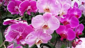 Beautiful orchids flowers and aquaponics growing