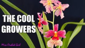 Cool Growing Orchids Update – Some good news & some bad news