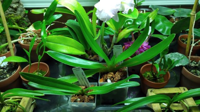 Couple new orchids from Tropical Gardens… yes, I bought some slippers :)