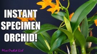 Creating a bushy, lush Orchid display – Fake specimen size Orchids