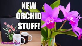 Curious things Orchids do #3 – Weird unknown Orchid + New collectables