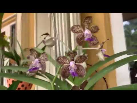 Fall is Here! A Walk Around My Garden and New Orchid Blooms