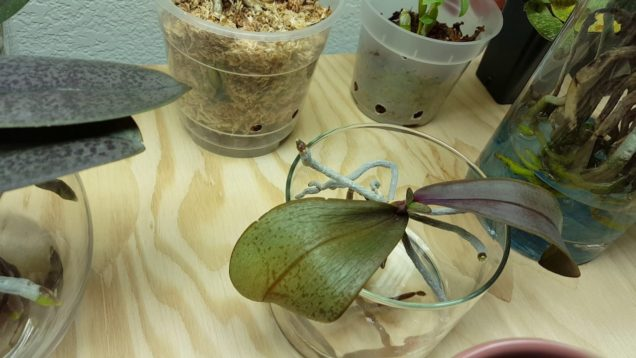 February 2017 Update on My Orchids