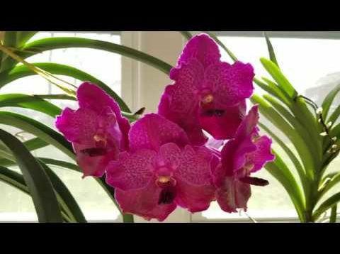 Fertilizers, media, & supplies I use for orchid growing, and where I find them!