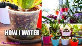 How I water my 400+ Orchids! – Setup and technique explained