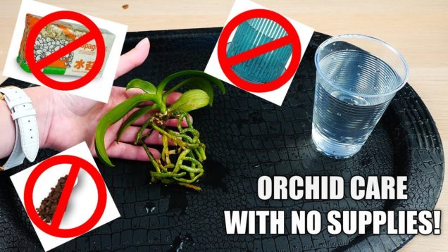How to Care for a New Orchid without Orchid supplies!