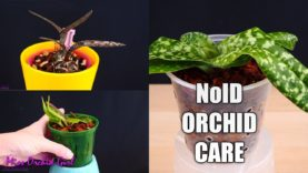 How to care for Orchids you don't know much about? – Very detailed guide