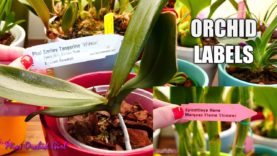 How to read & interpret Orchids tags / labels + The problems of name changing!