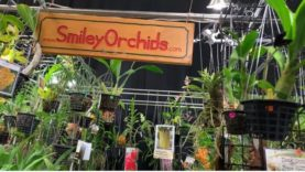 Miami International Orchid Show 2019, Amazing!