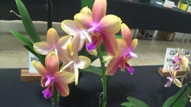 Monthly Show of Orchids.