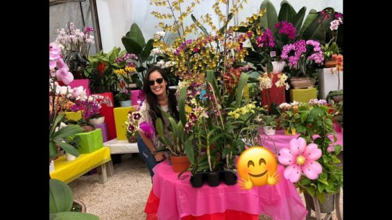 Mother's Day Gift Ideas, Shopping for Orchids, Choosing a Healthy Orchid