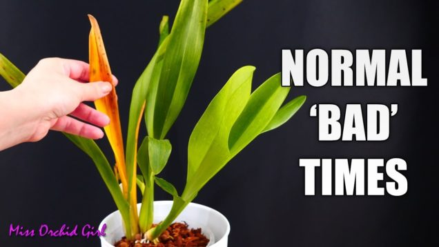 My experience with recovering Orchids – Looking bad before looking good