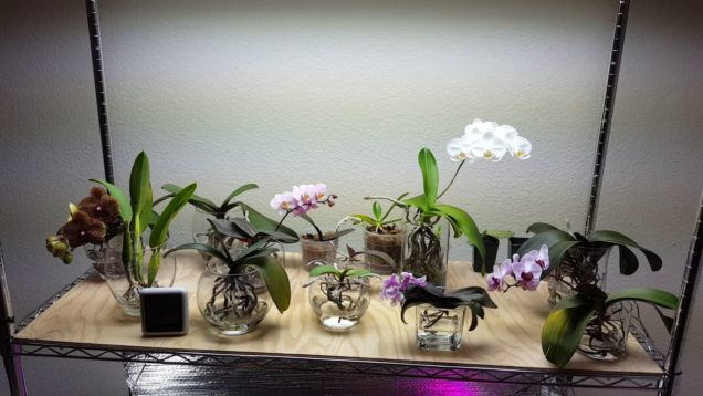 My Orchid Collection In 60 Seconds