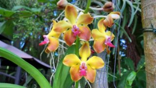 New Orchid Blooms, Orchid Garden Update, Garden Walk