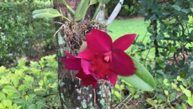 New Orchid Blooms, Orchid Sale, Rotting Issues, Tuesday Live Chat