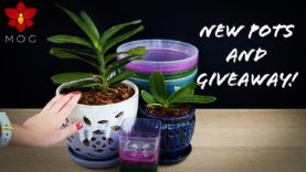 New Orchid pots from rePotme! + Giveaway! (CLOSED!)