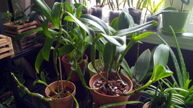 New orchids from Lucythecat
