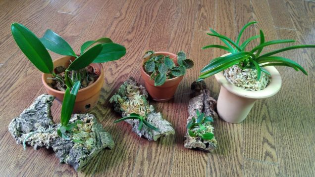 New orchids from ResQuetzal