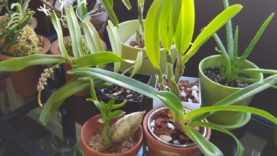 New orchids from TG Orchids