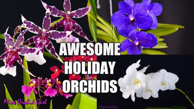 Orchid Care for Beginners – 5 Orchids that make great Holiday gifts! + Giveaway!