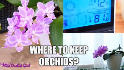 Orchid Care for Beginners – Where should I put my Phalaenopsis Orchid in my house?