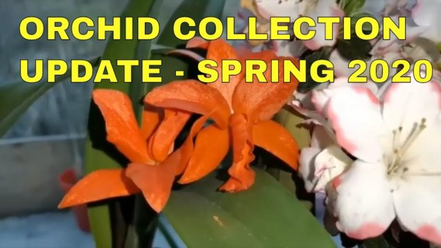 Orchid Collection Update – Spring 2020 – Part 1