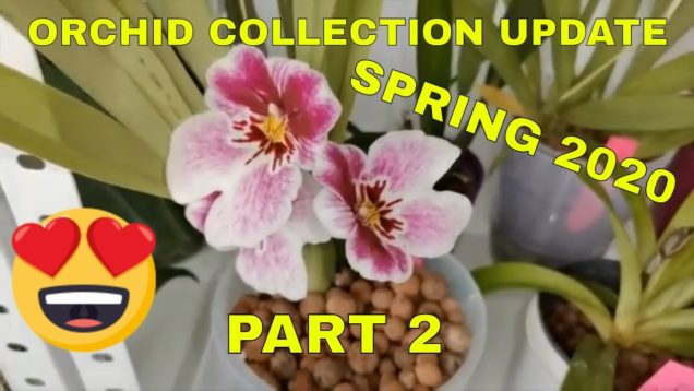 Orchid Collection Update  – Spring 2020 – Part 2