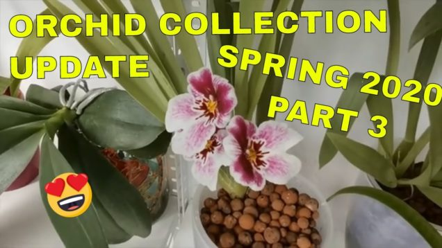 Orchid Collection Update   Spring 2020 Part 3