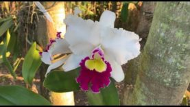 "Orchid Garden Update, Morning Walk After the ""Big Chill"" in Florida"