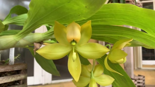 Orchid Garden Update, New Blooms, Orchid Haul, Post Shopping Video