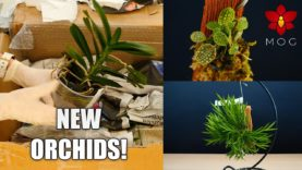 Orchid Haul and Mail Time! – More new and exciting Species to discover 🥰