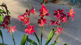 Orchid Haul, Boca Show and Morning Walk