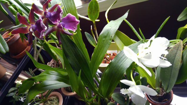 Orchid haul from Crystal Star, got some blooms too :)