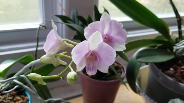 Orchid Media and Issues with Fertilizing