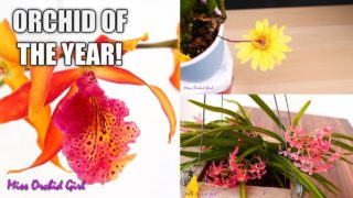 Orchid of the Year 2019! – Time for the final vote!