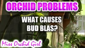 Orchid Problems – What is bud blast and what causes it?