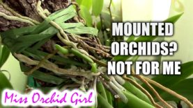 Orchid Q&A#46 – Hydrating Orchids, miracle 'potions' and techniques & more!