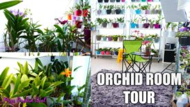 Orchid Room Tour! – What's new, my Orchid collection & more!