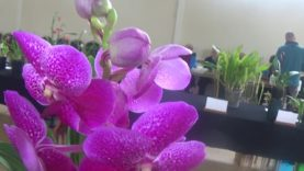 Orchid show and orchid auction