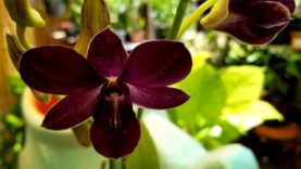 Orchids: Budding and flowering Expectations