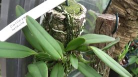 Orchids…….Davids greenhouse  Part two.