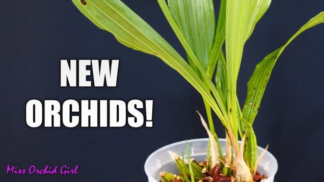 Orchids new and old – Swapping Orchids with another YouTuber!