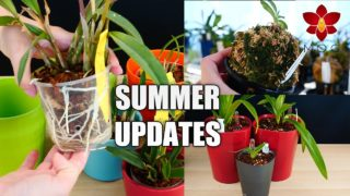 Orchids & Projects Updates + Summer break!